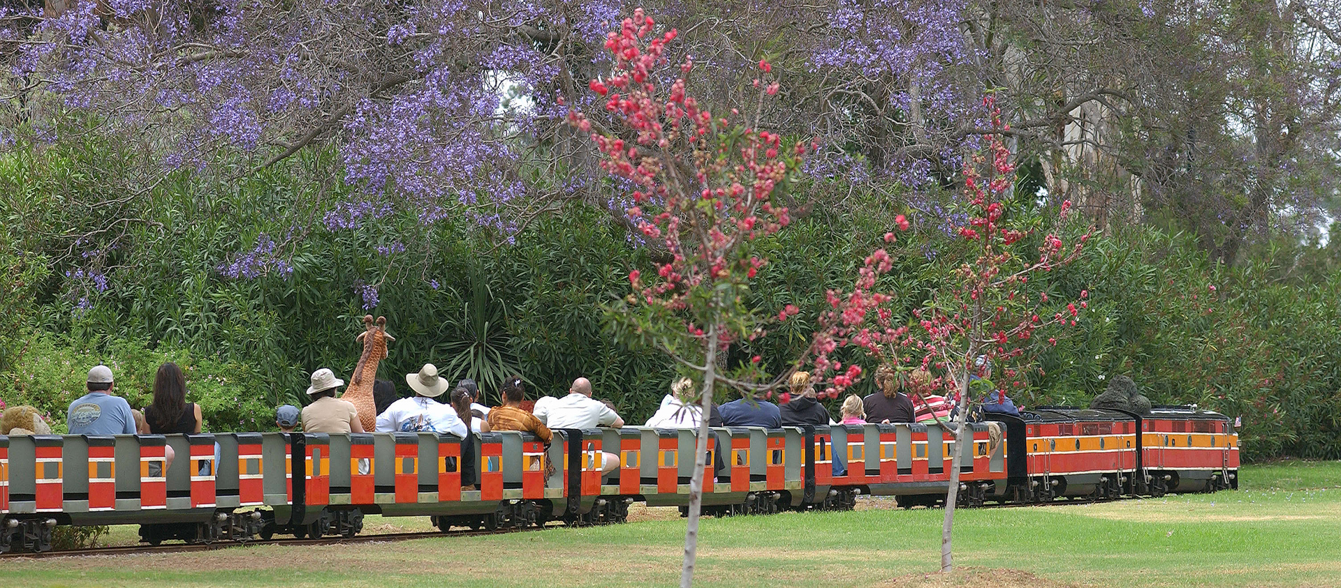 Balboa Park Miniature Train with blooming trees