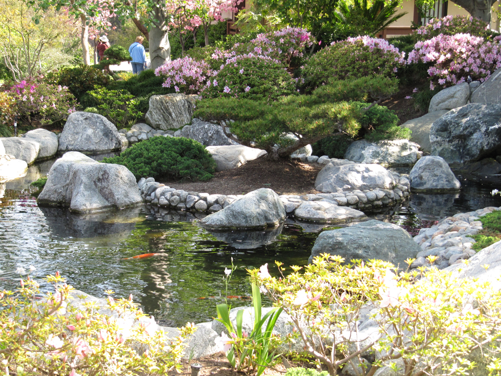 Koi pond and waterfall in the Japanese Friendship Garden at Balboa Park