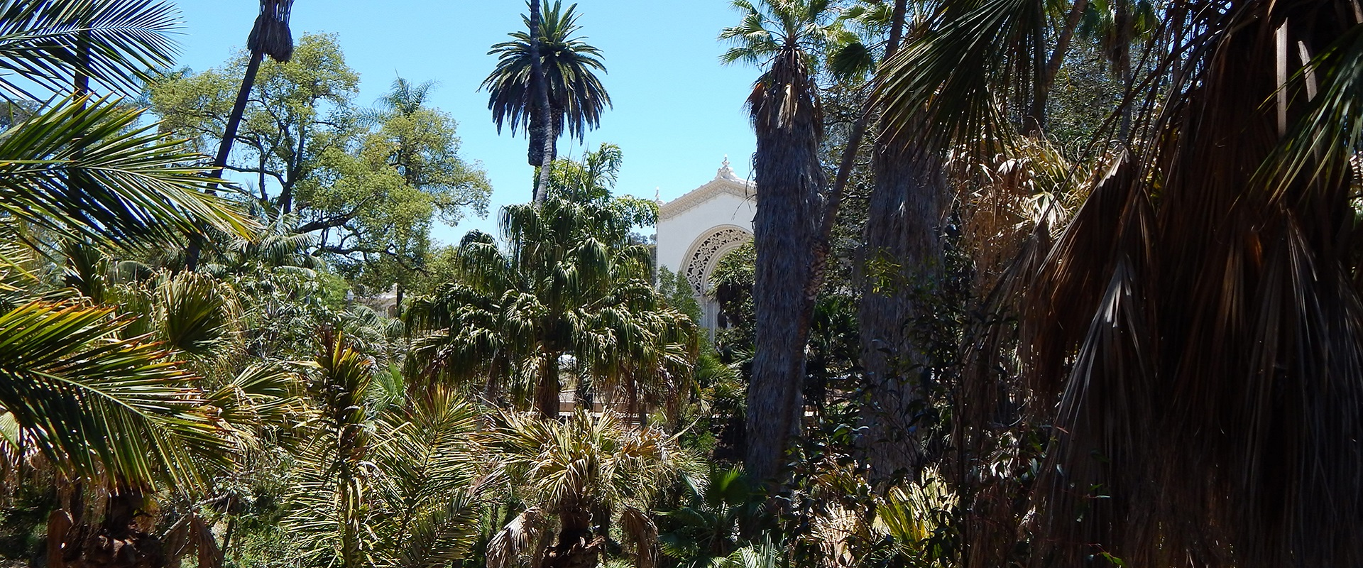 View of Palm Canyon at Balboa Park