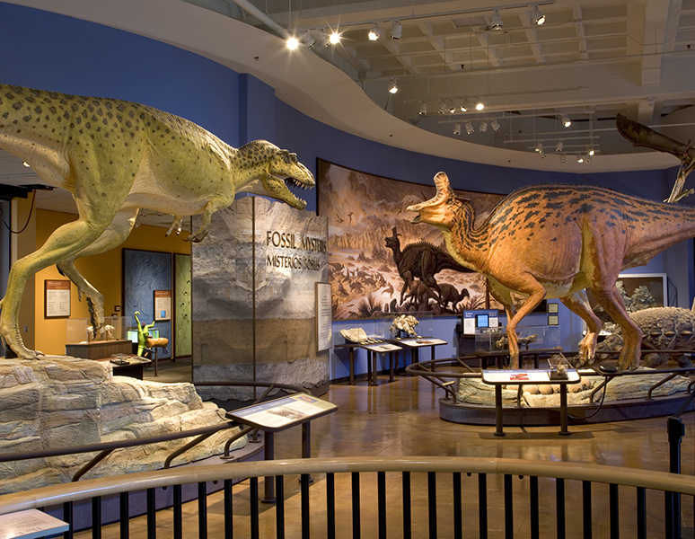 Fossils Mysteries