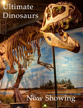 Ultimate Dinosaurs Exhibition at theNAT