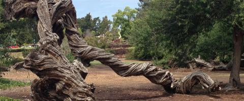 Interesting tree trunk in Balboa Park